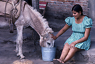 Asia Livestock