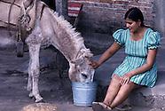 Livestock Asia 01