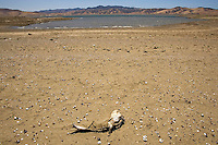 GUSTINE, CA - JULY 16:   A dead fish is seen at the bottom of the San Luis Reservoir on July 16, 2007 in Gustine California. California Governor Arnold Schwarzenegger stressed the importance of a comprehensive water plan as the current system is not prepared to handle the population growth projected for the next 50 years. The reservoir which is filled to just 20.797 percent of capacity and is down 186 feet from normal levels supplies water for the Silicon Valley, Central Valley farms and Southern California homes and businesses.  (Photograph by David Paul Morris)