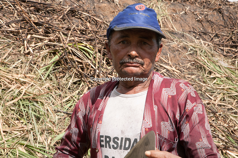 Seasonal sugarcane worker haversting sugarcane by hand in a farm located in the coastal area of Ipojuca in the Northeast state of Pernambuco, Brazil. In this area sugarcane harvest is manually done due to the presense of hills.