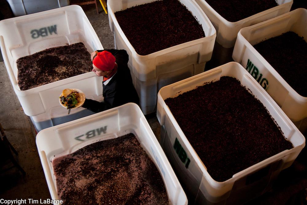 harvest and wine making at Vista Hills Vineyard in Dundee. Image © 2011 Tim LaBarge