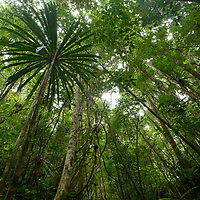 Lowland rainforest in Masoala National Park. Antsiranana, Madagascar.