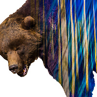bears cold wax and encaustic