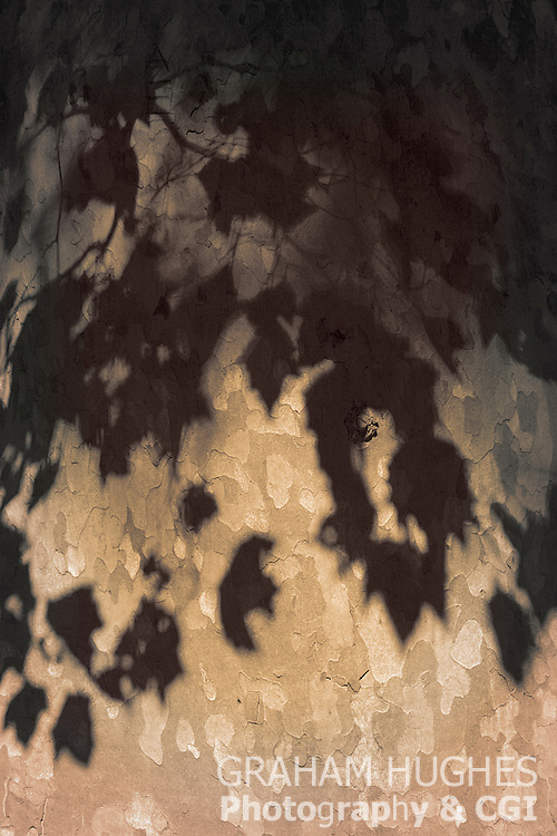 Tree leaf shadows on bark in Arqua Petrarca, Italy.