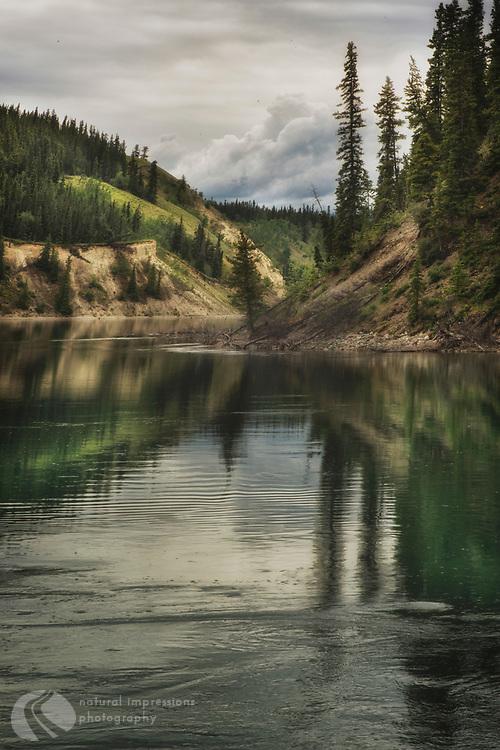 Yukon Territory, Alaska, Watson Lake, Whitefish, wildflowers