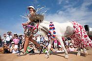 "Patty the horse participates in the ""Beach Bum and Bikini Babe Canine Costume Contest."""