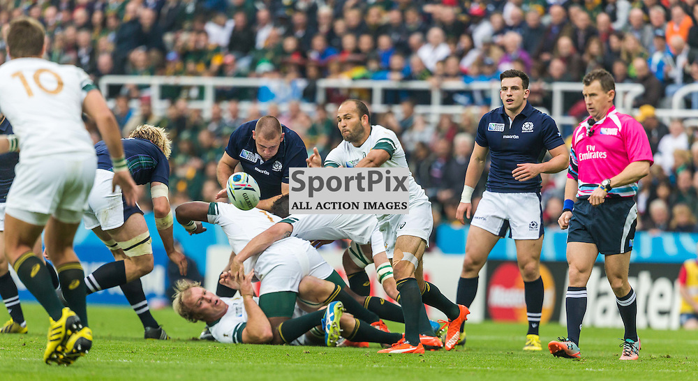 Fourie Du Preez in action during the Rugby World Cup match between Scotland and South Africa (c) ROSS EAGLESHAM | Sportpix.co.uk