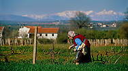BIJAKOVICI, BOSNIA-HERCEGOVINA: An elderly women makes her way as she picks dandelions in a field near the village center. (Photo by Robert Falcetti)