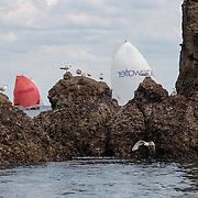 course de la classe mini sur des voiliers de 6m50 en solitaire au depart de la trinité - 500 milles