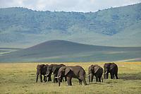 Ngorongoro Crater<br /> Ngorongoro Conservation Area<br /> Tanzania, Africa