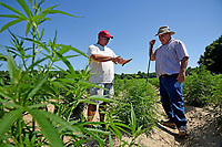 Broadway Hemp's Ryan Patterson (left) talks with his Harnett County extension agent Brian Parrish about his recent crop of hemp.