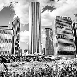 Black and white photo of Chicago skyline and Lurie Garden flowers in Millennium Park. Picture is high resolution and was taken in May 2012.