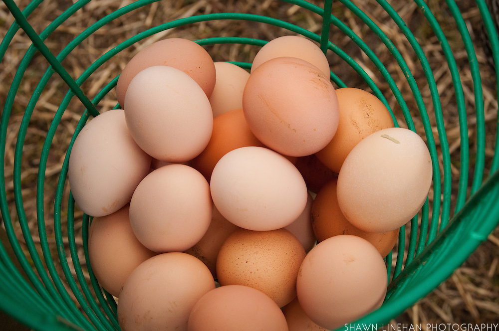 Eggs will last for 6 months if the natural coating is not washed off.