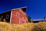 Image of a red barn and wheatfield, Palouse, eastern Washington, Pacific Northwest, property released