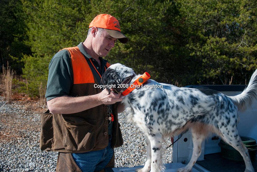 ENGLISH SETTER DOG STOCK PHOTO IMAGE