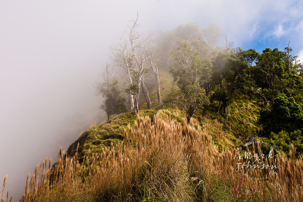 Fog in the native forest of the central mountains of Kokee, Kauai, Hawaii