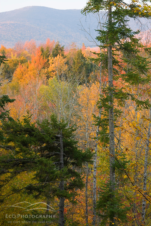 Private timber land in New Hampshire's White Mountains.  Jefferson, NH.