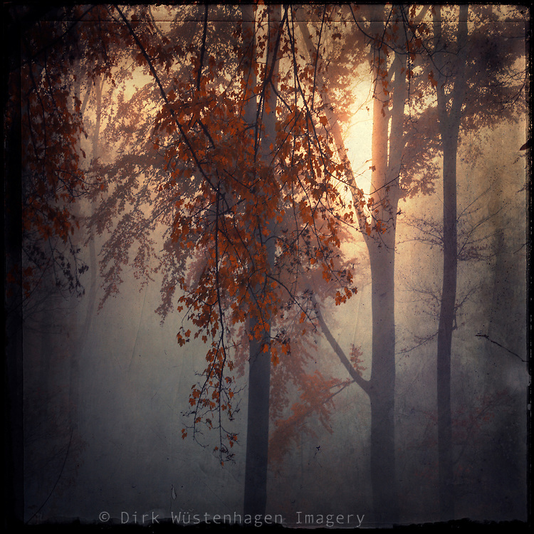 Foggy November morning with the sun just coming through - texturized photograph