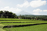 Rices terraces on the Munduk road