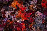 Close up of a leaf pile in fall.