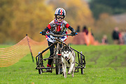 Jr. competitor runs 1 dog rig during the WSA Dryland World Championship 2019 at Firle Country Estate in the South Downs National Park, Lewes, Sussex, United Kingdom on 16 November 2019.