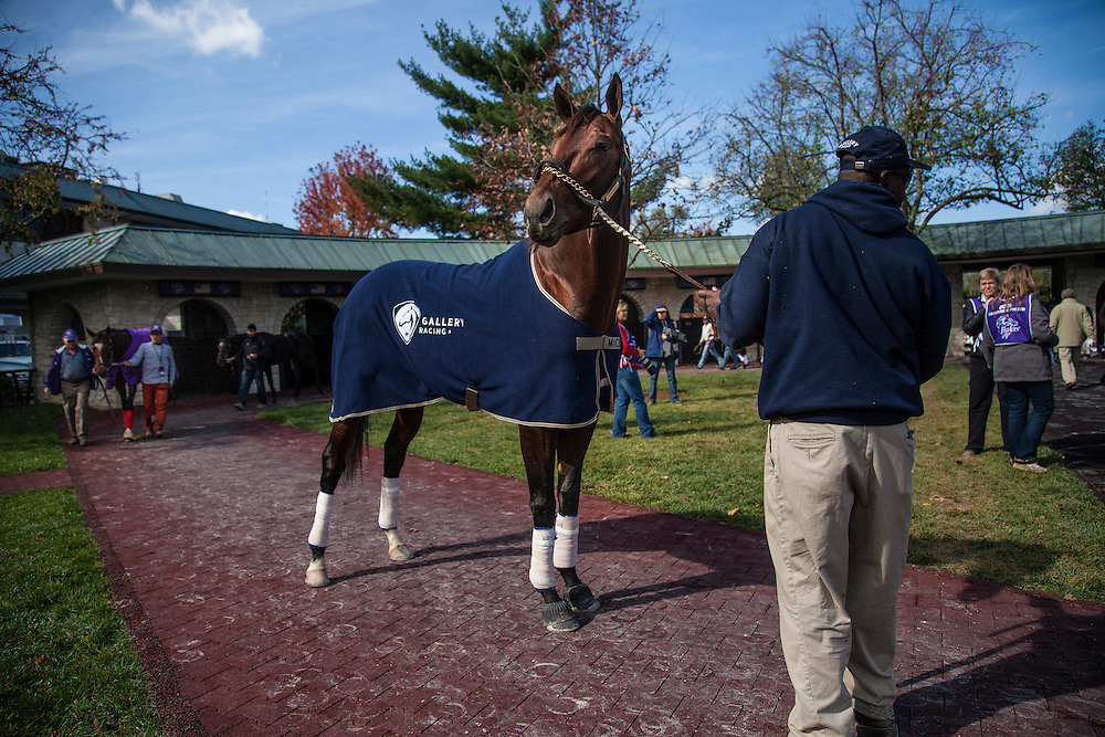 October 29, 2015:   Runhappy, trained by Maria Borell and owned by James Mcingvale, exercises in preparation for the Breeders' Cup Sprint at Keeneland Race Track in Lexington, Kentucky. Alex Evers/ESW/CSM
