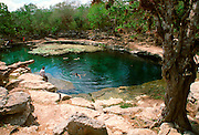 MEXICO, MAYAN CULTURE, YUCATAN PEN. Dzilbilchaltun; used from 1500BC to 1500AD, swimming in Cenote Xlacah on site