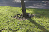 Base of tree in grass verge, urban area in Dublin Ireland