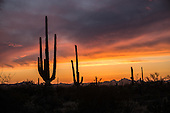 SaguaroNationalPark sunsets