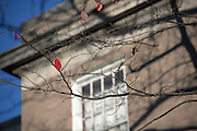 The last leaves of autumn fall on College Green as the sememster nears its final weeks on November 12, 2016.