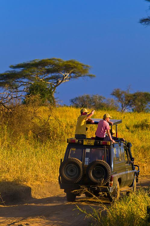 A couple watching lions from the top of a safari vehicle, Tarangire National Park, Tanzania