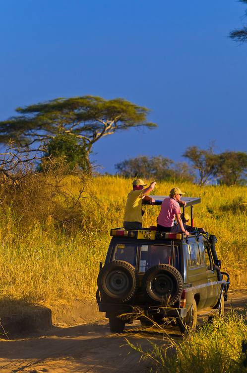 A couple watching lions from the top of a safari vehicle, Tarangire National Park, Tanzania