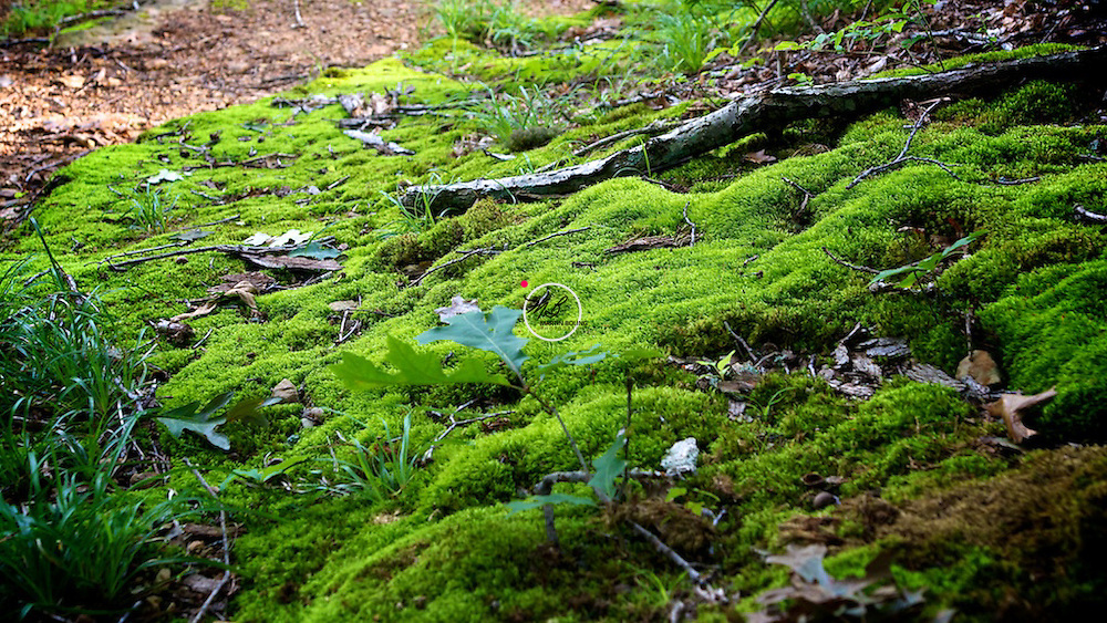Moss, steep cliffs. at Green's Bluff Preserve, Indiana