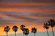 Photo sunset wall art. Santa Monica orange sky, palm trees, beach. Matted print, Westside, Venice, Los Angeles, Southern California photography. Fine art photography limited edition.