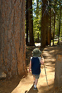 Child hiking with stick through trees in forest along the Tokopah Falls trail, Sequoia National Park, California