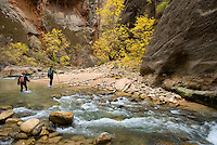 Hikers in Zion Canyon Narrows, Zion National Park Utah USA