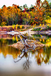 A vibrant Autumn scene at Klondike Lake around an old withered tree long dead in the middle of the lake