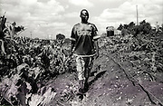 NAIROBI, KENYA - MARCH 17, 2010: Youth leader Moses Omondi surveys an agricultural project where vegetables are grown to be consumed and sold at market. <br />