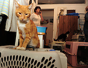 SUN-STAR PHOTO BY BEA AHBECK<br /> Renate takes another call while working at the Last Hope Cat Kingdom in Atwater, Calif. Nov. 19, 2010.
