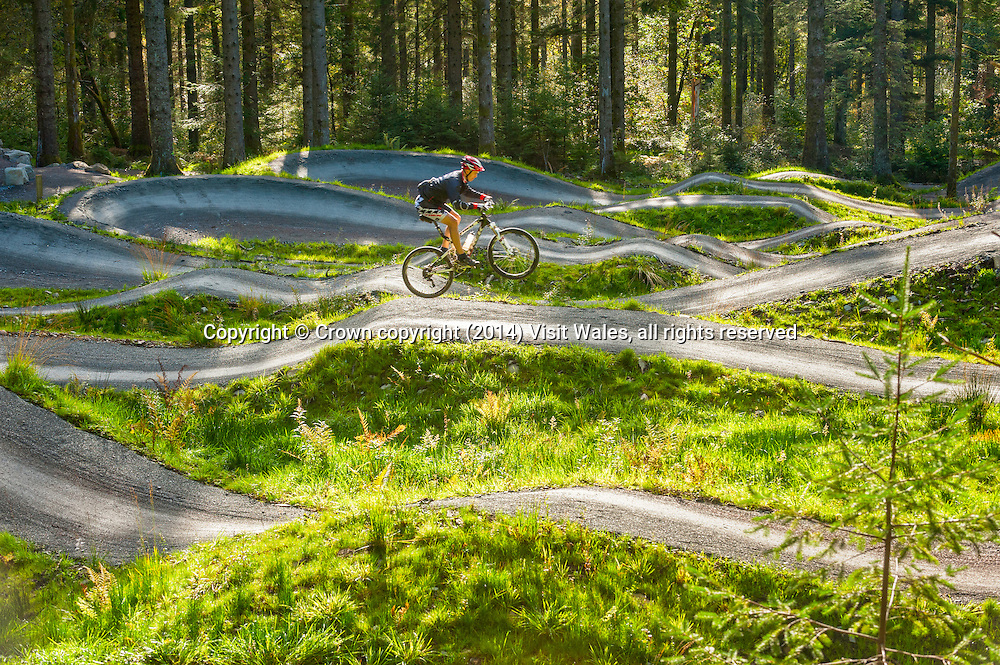 Mountain Biking<br /> Coed y Brenin<br /> Snowdonia<br /> Gwynedd<br /> Mid<br /> Activities and Sports