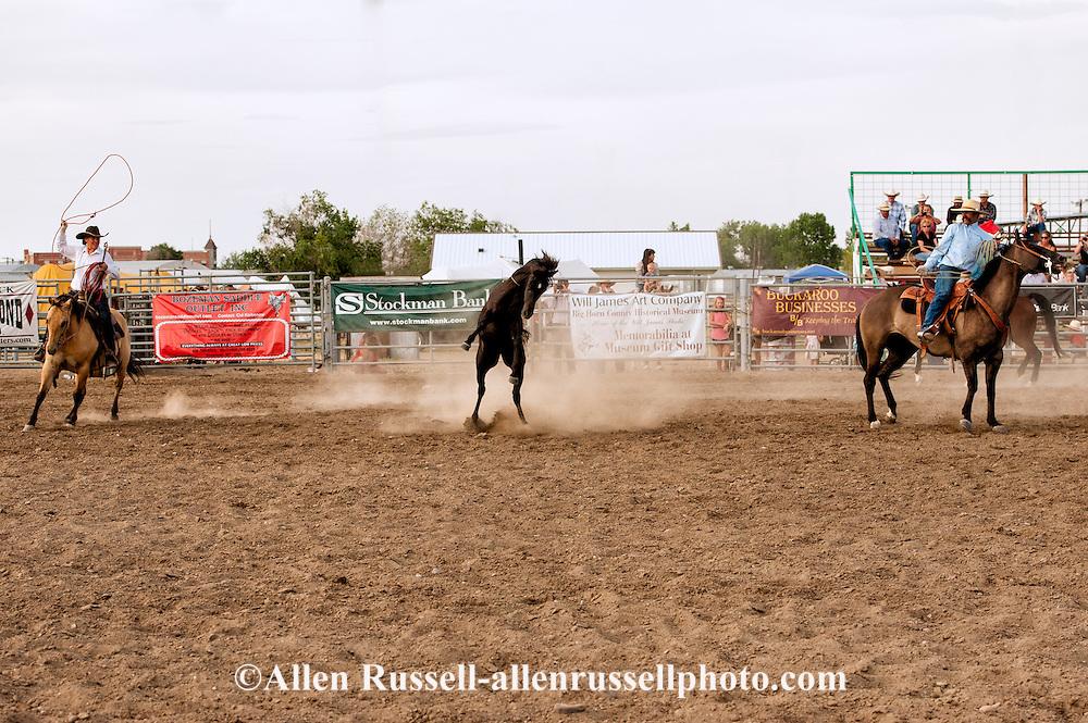 Will James Roundup, Ranch Rodeo, Wild Horse Roping, Jess Reid, Hardin, Montana.