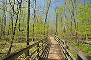 boradwalk through marsh in Carolinian forest in spring <br /> Rondeau Provincial Park<br /> Ontario<br /> Canada
