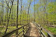 boradwalk through marsh in Carolinian forest in spring <br /> Rondeau Provincial Park<br /> Ontario<br /> Canada