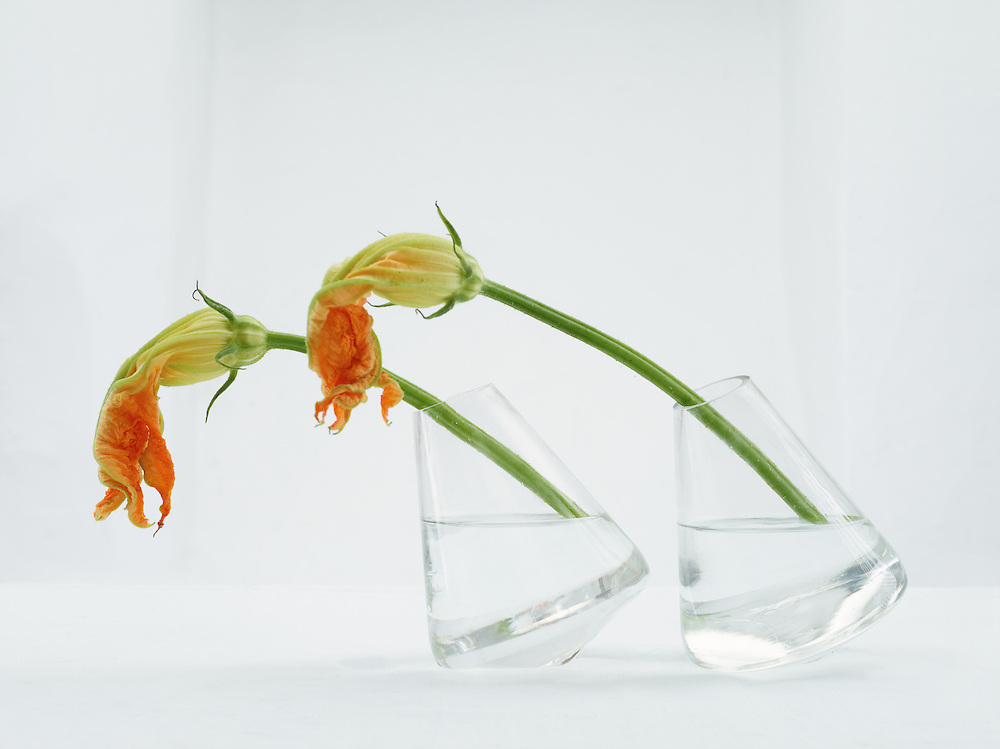 still life with zucchini flowers against a white old wall.