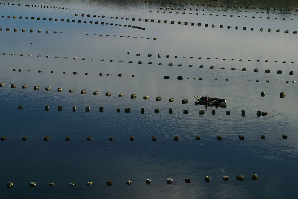 Fishermen collecting mussels off of Chiloe Island, Chile, Feb. 11, 2004. Daniel Beltra/Greenpeace.