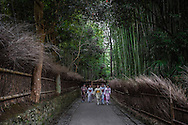 Young Chines-speaking tourists, dressed in traditional Japanese clothing, walk through Kyoto's famous bamboo forest.  Arashiyama, Kyoto, Japan.