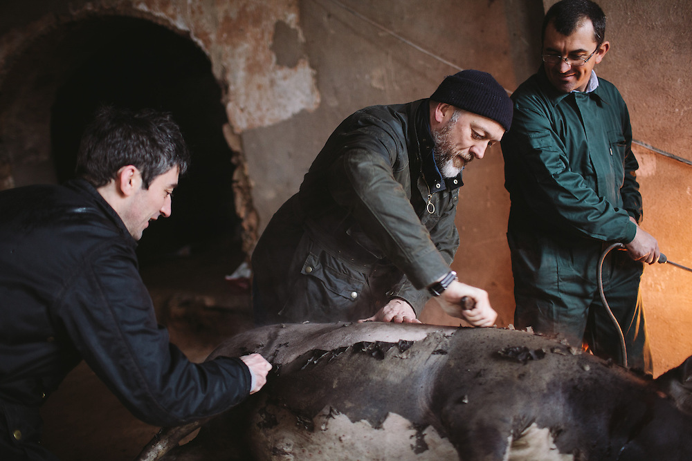 Food writer Tim Hayward and Chef/Director of the Salt Yard Group, Ben Tish, have a go at removing the hair and skin of a slaughted Iberico pig. Finca Al Cornocal, Extramadura (Barajoz Province), Spain.