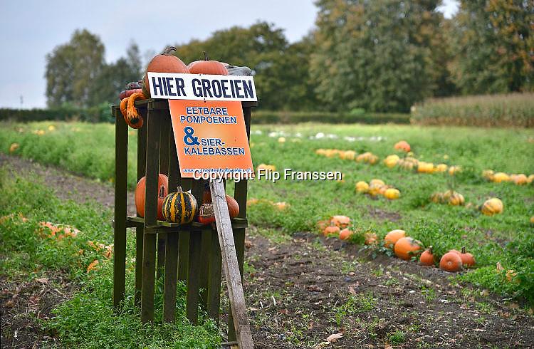 Nederland, Groesbeek, 10-10-2017 Pompoenverkoop bij een boer aan huis. Als extra bijverdienste verkopen veel boeren pompoenen en kalebassen. Voorbijgangers kunnen een pompoen kopen om als sierobject te hebben of om soep van te maken. Ook bij Halloween worden pompoenen gebruikt.FOTO: FLIP FRANSSEN
