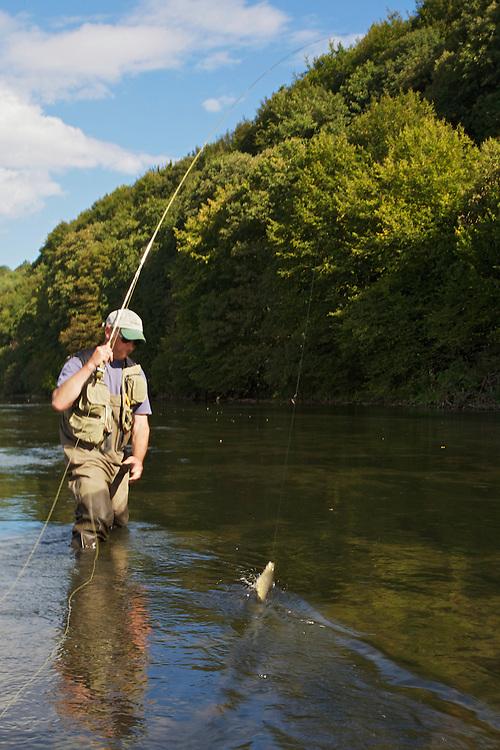 Jeremy Lucas (Pioneer Flyfishing Ltd) pulling in a San River Brown trout (Salmo trutta f. fario). Myczkowce, Poland.