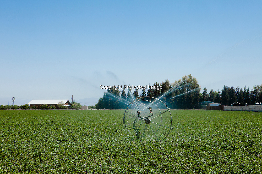 Sprinklers in a farm fild located in the Central Valley, California